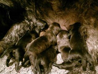 Puppies just born