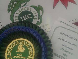 Dobbie CRUFTS qualified @ Paddys Day Show