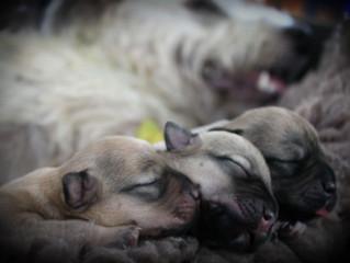 Puppies :) :)