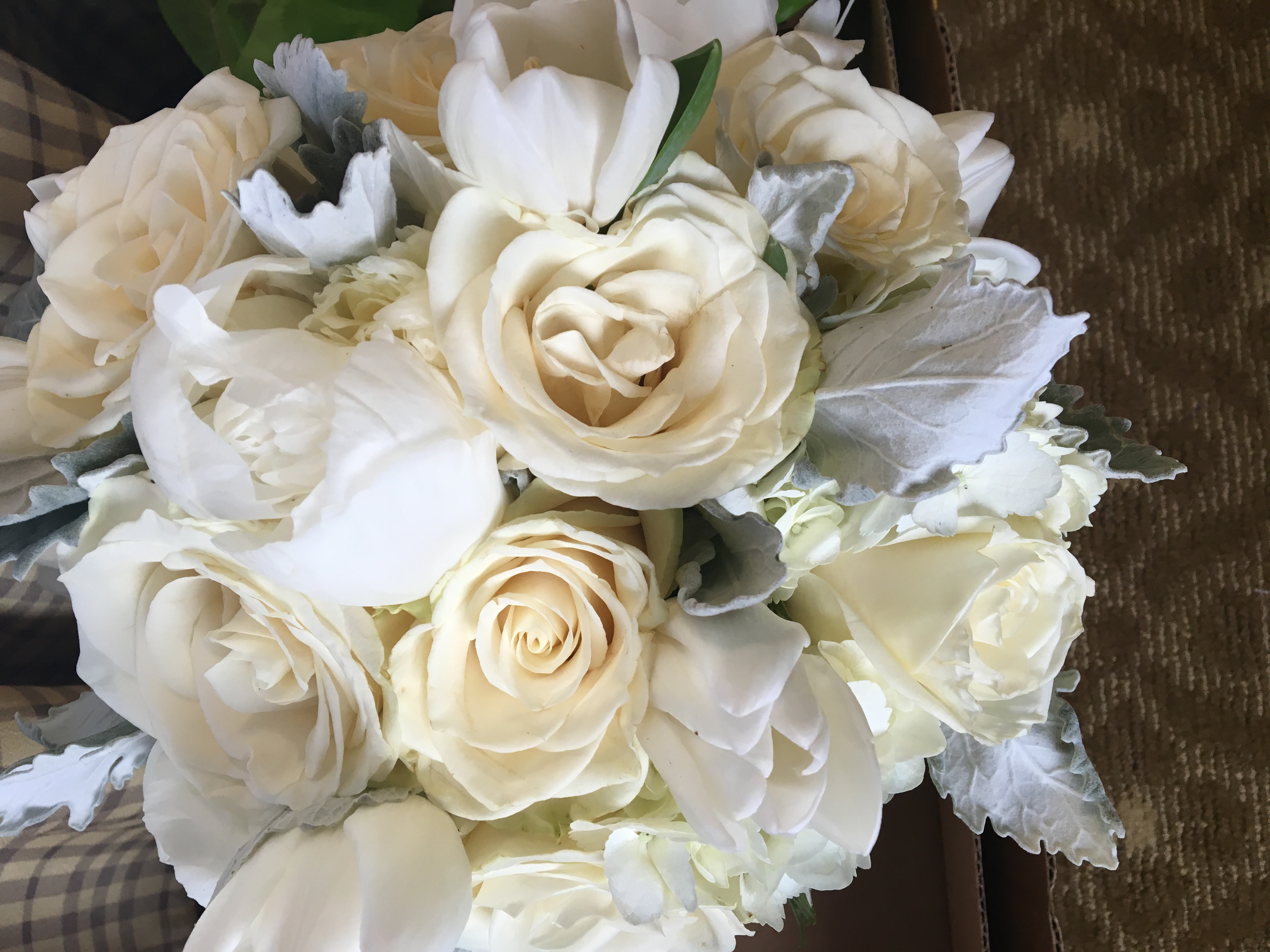 Peonies,Tulips & Roses Dusty Miller