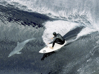 Почему дельфины серфят?