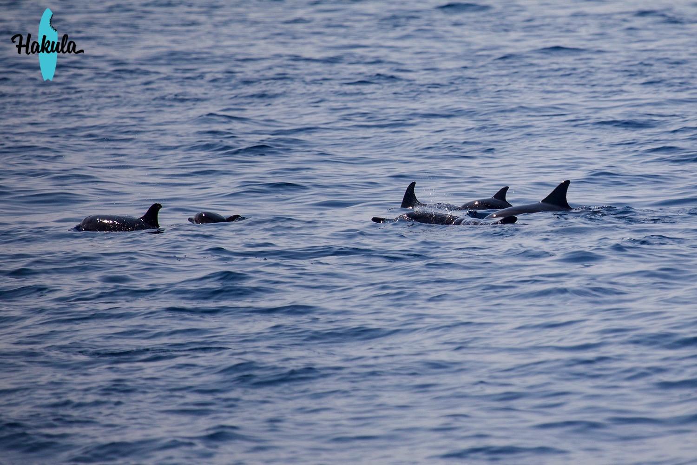 дельфины на Мальдивах
