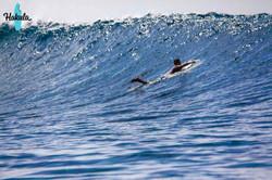 серфинг на Мальдивах, Лааму атоллы