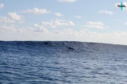 дельфины и мальдивская волна