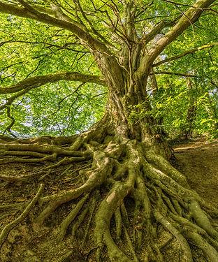 green-tree-photo-1080401.jpg