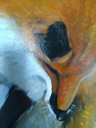 Detail of Red Fox