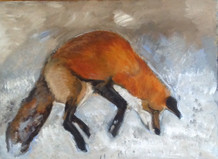 Profile of Red Fox