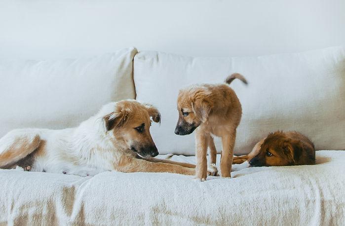 Erin+dogs-1539.jpg
