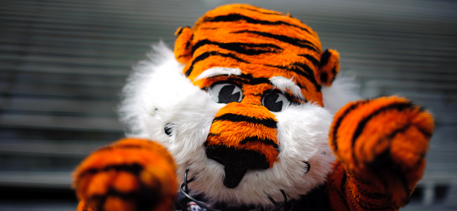 Aubie, He's a Real Cool Cat!