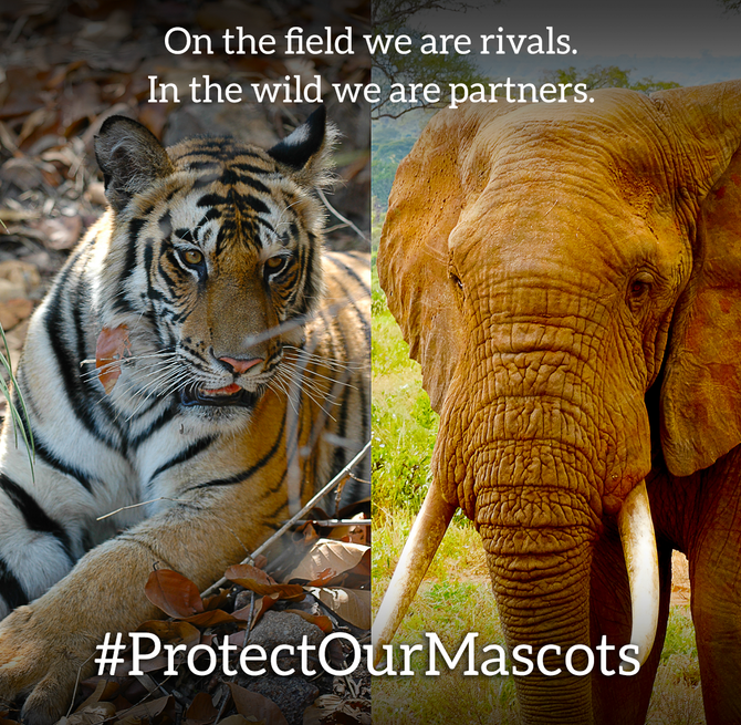 Rally Thousands of Fans during the CFB National Championship to support conservation #ProtectOurMasc