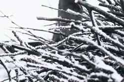 Snow day 03