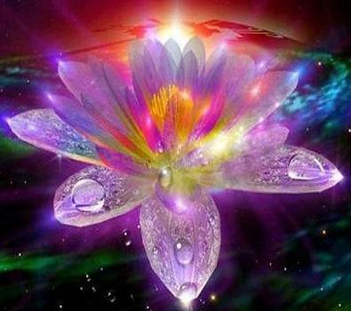 lotus_flowerofhonesty.jpg