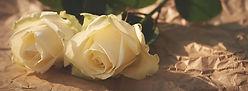 white-roses-1082126_960_720.jpg