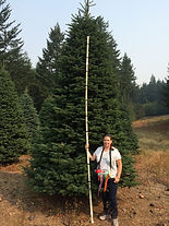 tall large living fresh huge gigantic big redwood bear honey trees