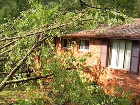 Trees Fall In Sudden Storm