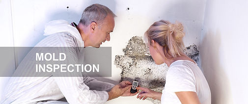mold inspections.jpg