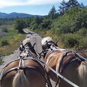 wagon rides durango co.jpg