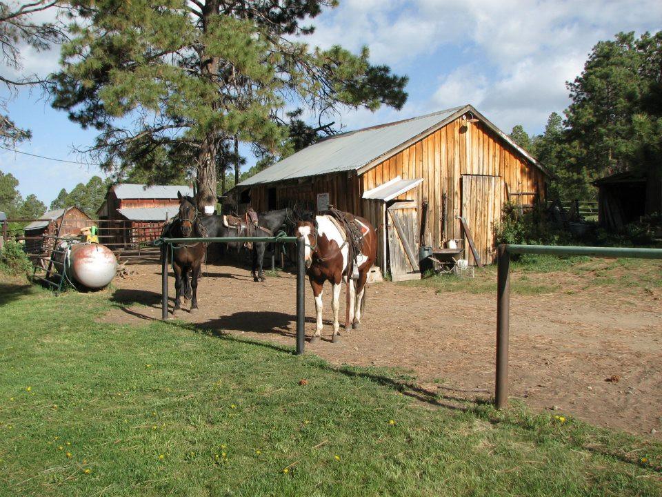 rimrock horses.jpg
