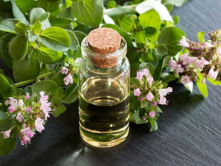 Oregano-Oil_-Guide-To-Essential-Oils-_-A