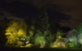 Uplit group of trees