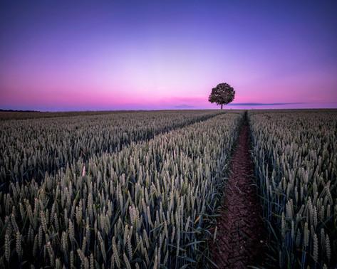 Bedfordshire Twilight