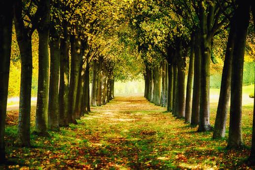 Autumnal Gardens