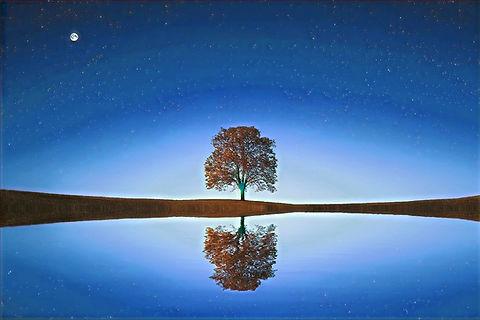 tree-838667_1280_edited_edited.jpg