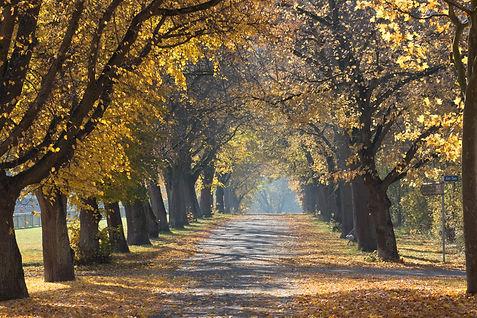 trees-1030853_1920.jpg