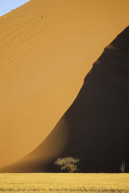 Dune et arbre vert A3+ copie 3.jpg