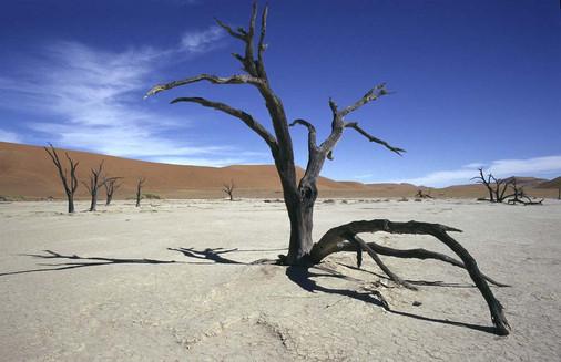 Dead_Vlei_arbre_courbé.jpg