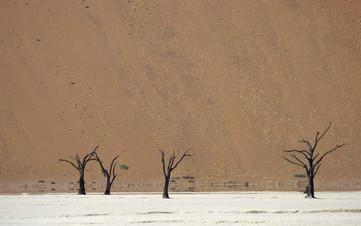Dead vlei 3 arbres.jpg
