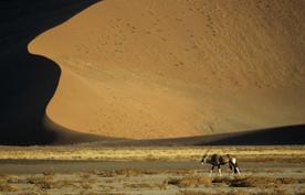 Dune et oryx copie.jpg