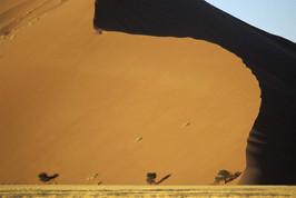 Dune 45 horiz + 3 A3 +arbres copie.jpg