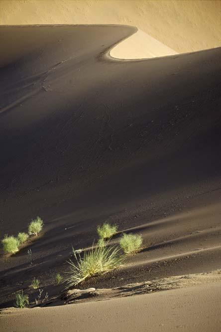 dune et buissons vert Demi A3 copie.jpg