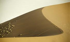 dune coube+ buissons horiz copie.jpg