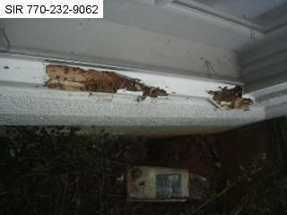 termite activity.jpeg