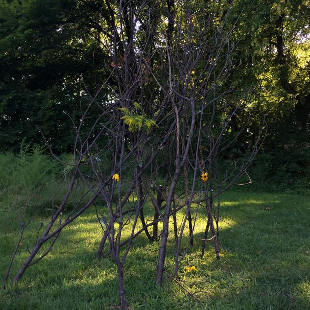 Waseca Art Center - Group Sculpture // Summer Art Camp 2020