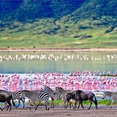 La gran migración del Serengeti