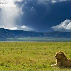 El cráter de la vida: Ngorongoro
