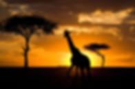 DE KENIA A TANZANIA II