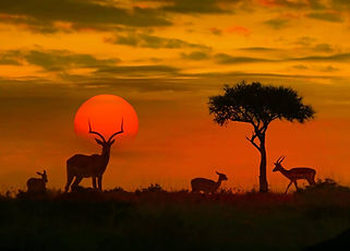 SUDÁFRICA, ZAMBIA