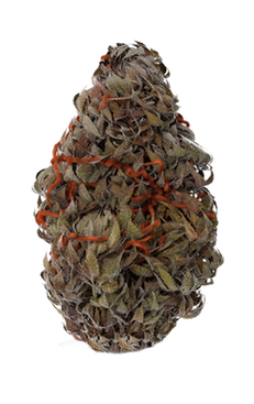 weed-bud-cbh-india.png