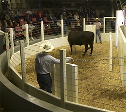 SURVIVOR® LV Livestock Ring Scale