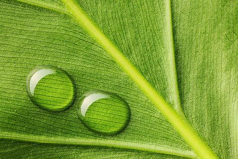 water-drops-on-leaf-P9KAPR5.jpg