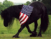 Friesian horse with American Flag