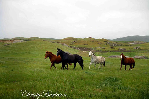 Horses galloping in a green field