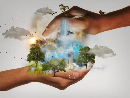 Concurso De Dibujo Y Pintura Para Preservar Los Bosques