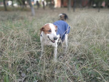 Entrega De Medalla Al Merito De La Guardia Canina De La UMSS