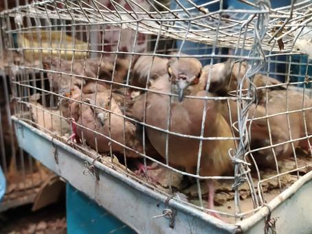 Campaña Para Cerrar 89 Casetas Que Venden Animales A Los Cuales Ponen En Peligro, Reporte UMSS