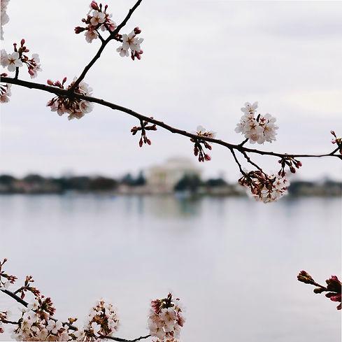 fleurs, air du temps